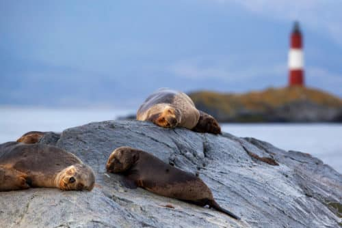 Sea lions in the Beagle Channel, Ushuaia, Argentina