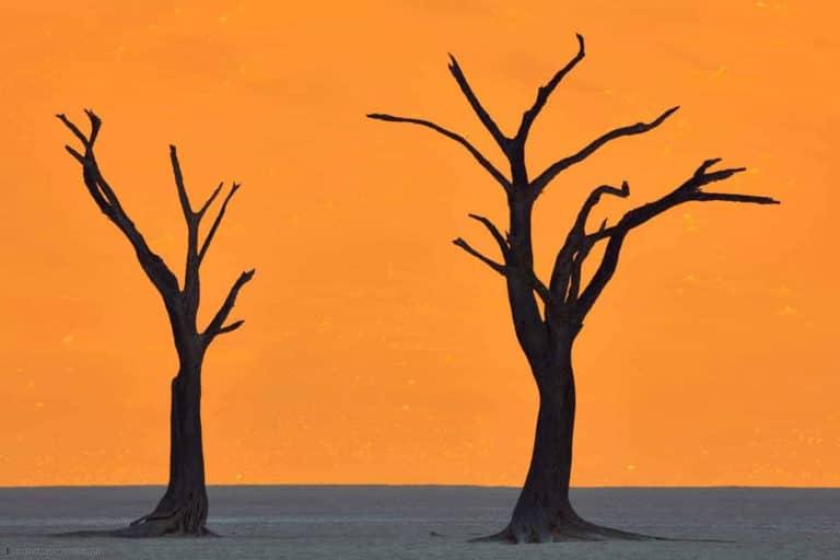 Dead Vlei en Namibia